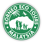 Borneo Birding